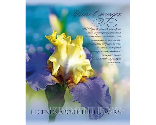 Тетрадь общая Цветы в легендах A5 48 листов в клетку на скрепке в ассортименте - (669571К)