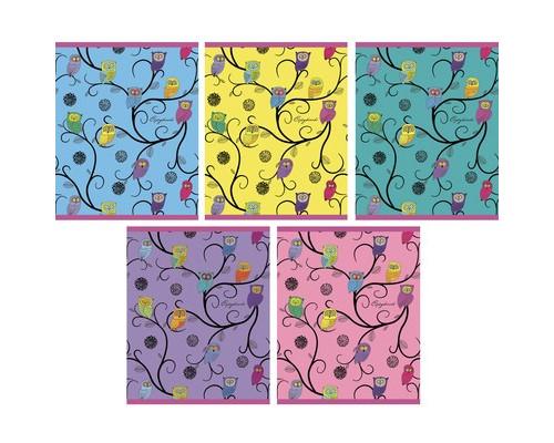 Тетрадь общая Совы А5 48 листов в клетку на скрепке - (556929К)